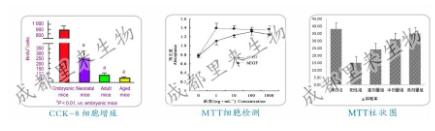 MTT檢測