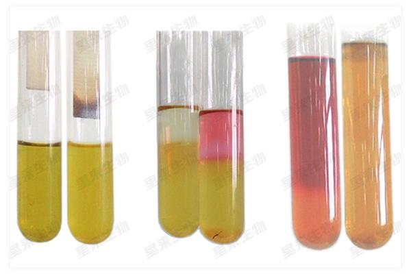 細菌代謝產物檢查