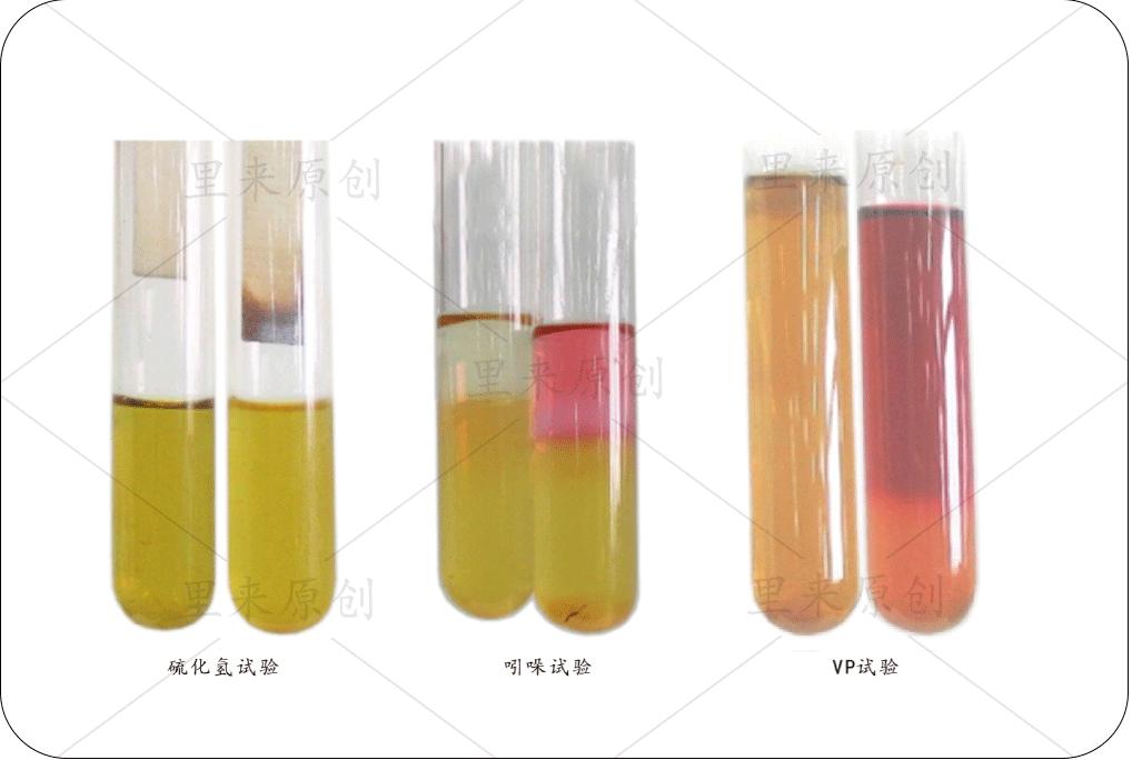 單個抑菌實驗結果